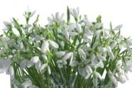 cveti_8
